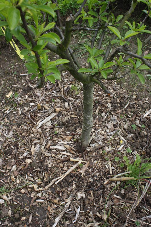 Pailler pour valoriser les déchets verts et enrichir les sols