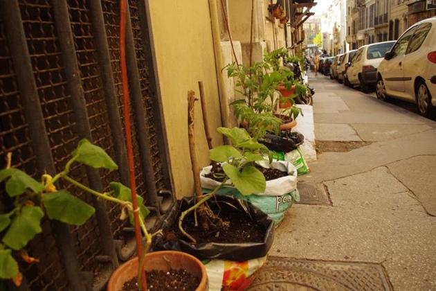 L'espace public jardiné par les habitants