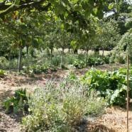 De la ferme au paysage permaculturel