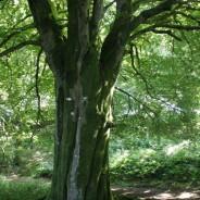 Vers une gestion forestière différente ?