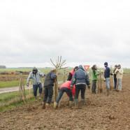 Chantier participatif de plantation à Lhopiteau
