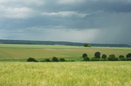 Développement de la biodiversité sur les exploitations agricoles de la plaine de Bailly (Yvelines)