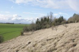 Animation pour l'entretien des prairies calcicoles de la plaine de Versailles